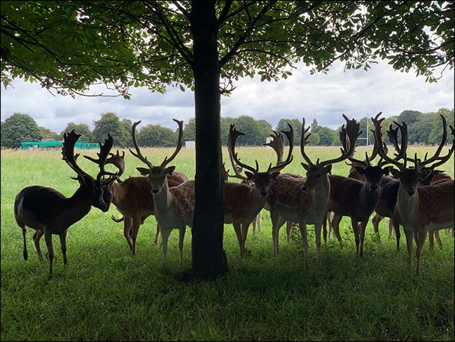 A group of deer under a tree in a missed exposure.