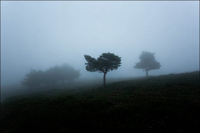A moody shot of trees in fog.