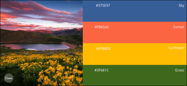 Color Palette Sample Canva