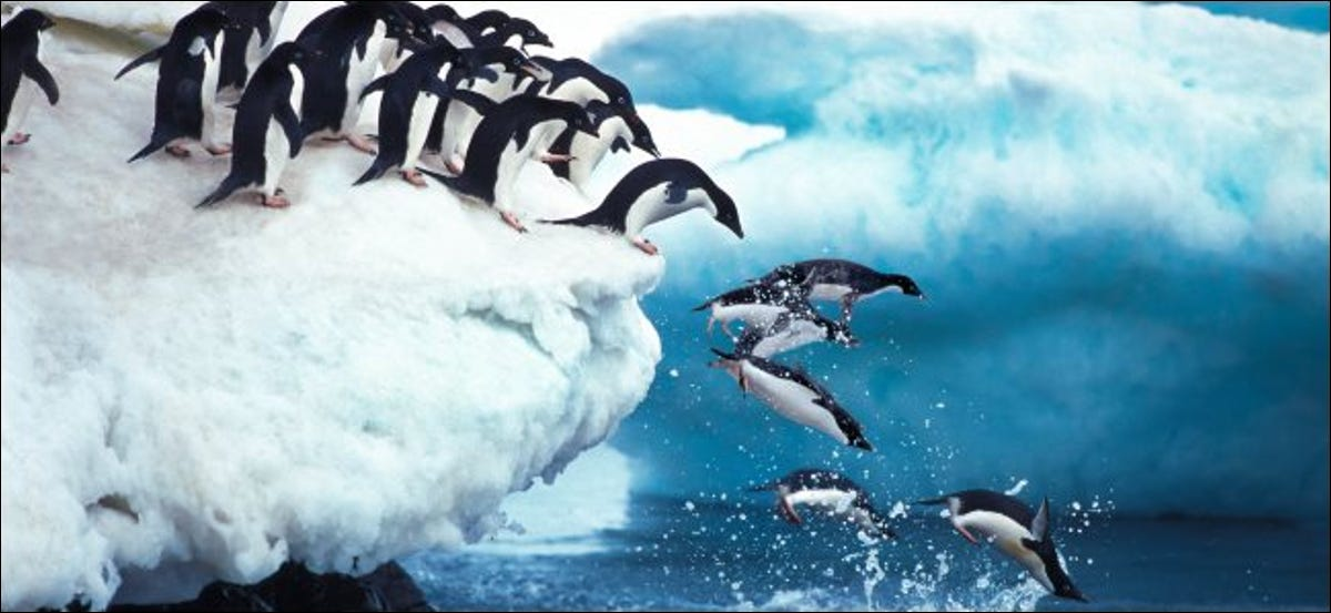 Penguins jumping into the ocean