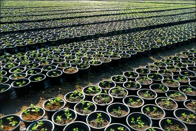 Hundreds of potted plants in rows
