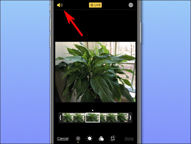 Tap the speaker icon in the top left corner of the screen to turn off the Live Photo audio.