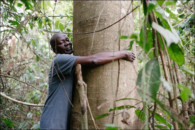 Misją Ecosia jest sadzenie drzew