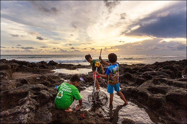 three children fish in rockpool