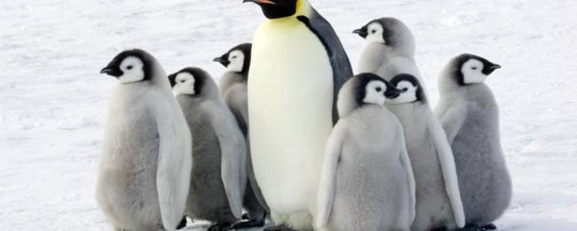 The Best Linux Distributions Without systemd