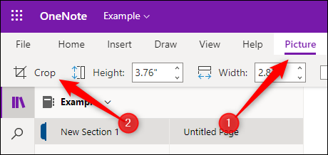 The file tab and crop option in OneNote for the Web