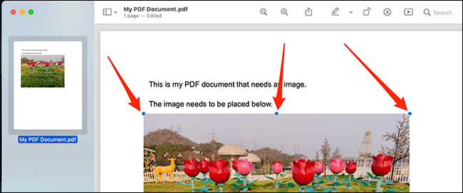 Use the object handles to position and resize your image in the PDF file.