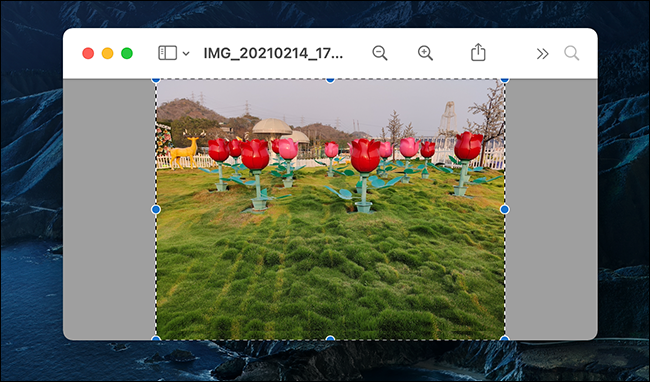 Select the entire image in Preview.
