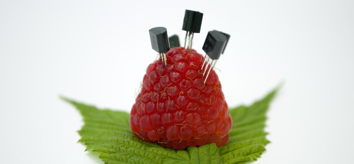 Une framboise avec des condensateurs coincés dedans.