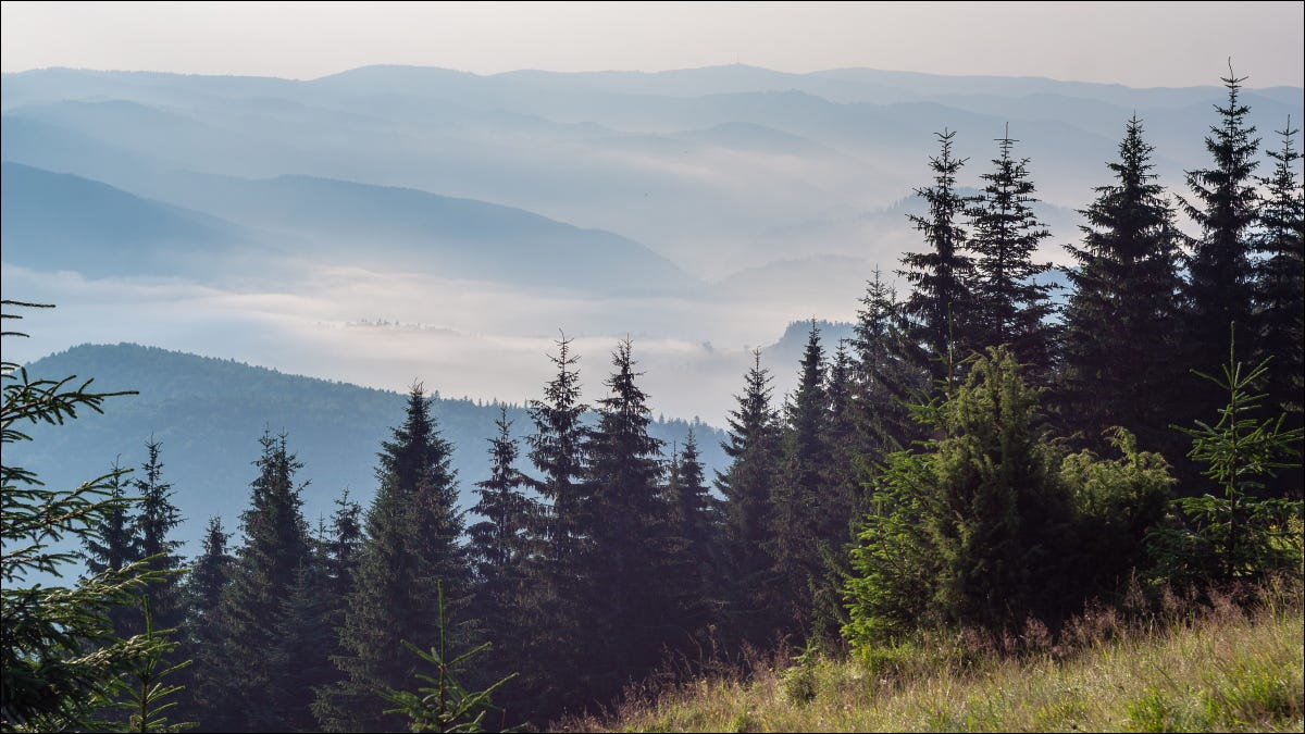 A foggy forest valley viewed from the top of a forested mountain.