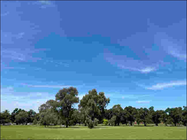 Compressed JPEG image of trees under a blue sky