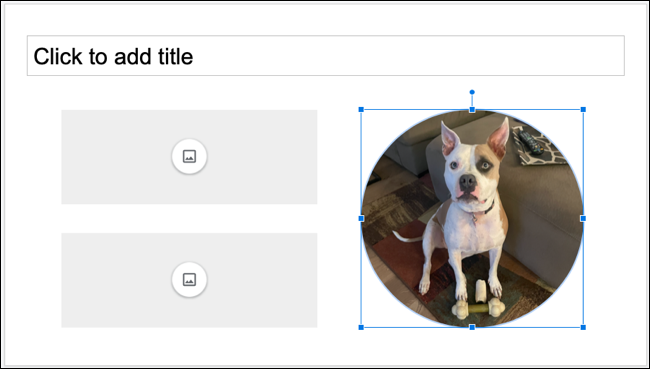 Image inserted in placeholder