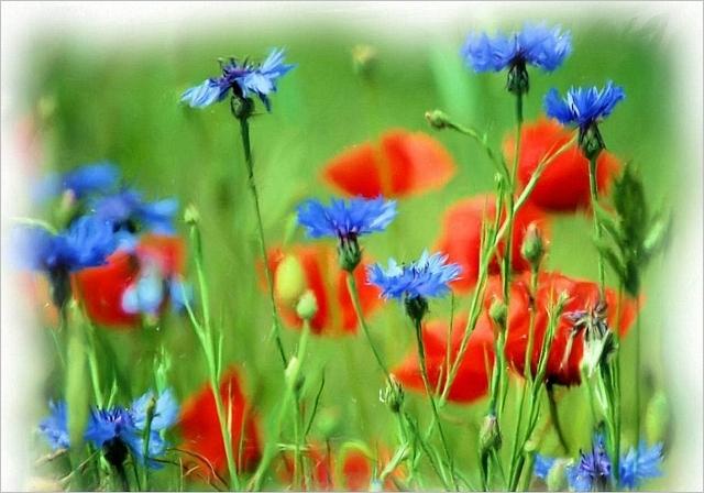 meadows-10